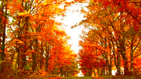 Free Animated Falling Leaves Wallpaper Fall Gifs Find Amp Share On Giphy