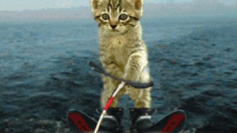 Cute Cat Moving Wallpaper Cat Gif Find Amp Share On Giphy