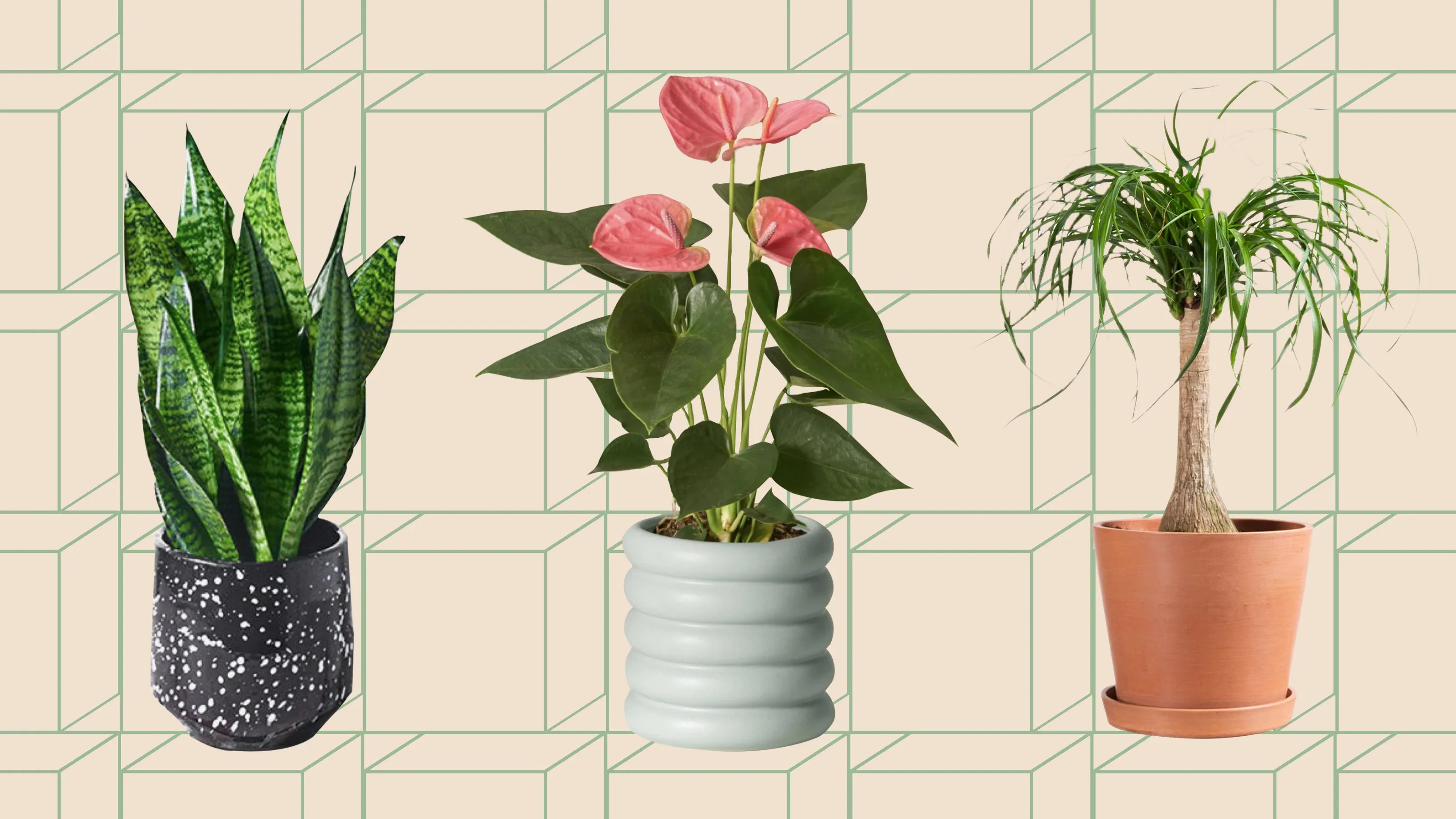 13 Houseplants For Beginners What You Need As A First Time Plant Owner Glamour