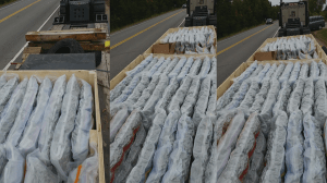 RCMP seize trailer-truck in Nova Scotia filled with drugs