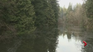 Seymour River Floods to Create New Lake