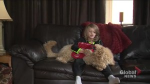 Waterloo Catholic School Board refuses to accommodate service dog