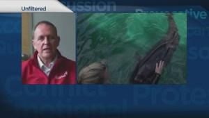 Chester the false killer whale finds permanent home at Vancouver Aquarium