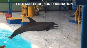 Footage from travelling circus appears to show dolphins suffocating