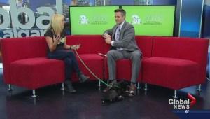 Alberta animal rescue group celebrates 10-year anniversary