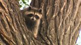 Kildonan critters offer glimpse of Winnipeg wildlife