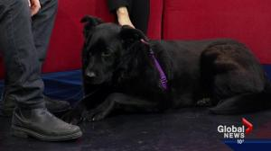 Pet of the Week: Cora-Lily