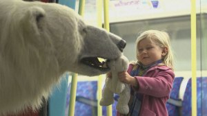 Lifelike polar bear puppet roams through London