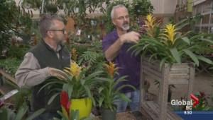 Gardening: Bromeliads