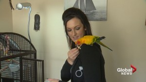 'A miracle': Calgary parrot missing for three months returns home