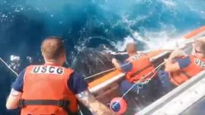 Coast Guard rescues 800-pound turtle trapped in fishing lines