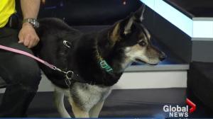 Edmonton Humane Society: Corazon & Tabitha