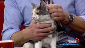 Edmonton Humane Society: Buck & Pebble