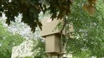 14-year-old told to tear down treehouse after complaint