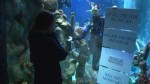 Aquarium employee proposes to girlfriend from inside shark tank