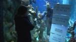 Aquarium employee proposes to girlfriend from inside shark tank