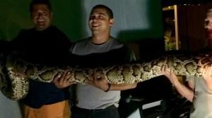 15-foot python captured outside Florida restaurant