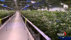 Medical marijuana company Aurora Cannabis expands to Edmonton airport