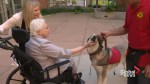 Pet therapy makes a difference in the lives of people experiencing memory loss.