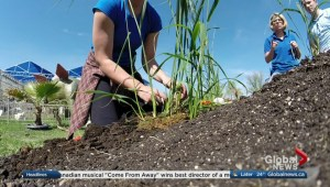 Get Gardening with Global News Morning – Planting