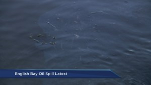 What effect will the Vancouver oil spill have on the environment, wildlife and economy?