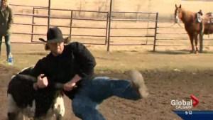 Alberta cowboy Bryn Roy brings rodeo determination to the CFL