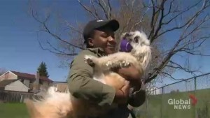Toronto woman reunited with dog after taken from park bench