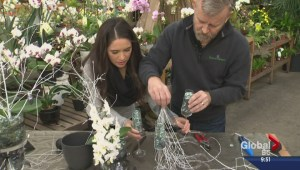 Gardening: New Year's Eve orchid