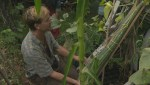 Okanagan gardener grows giant cucumber