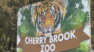 Cash-strapped Saint John Cherry Brook Zoo goes online in fundraising attempt