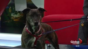 Pet of the Week: Shiver