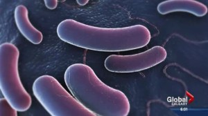 E.coli outbreak being traced to source