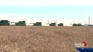 Alberta group donates canola crop to help battle worldwide hunger