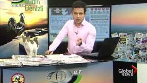 Stray cat becomes a surprise guest on live Turkish television