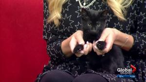 Pet of the Week: Harry Potter and Draco Malfoy