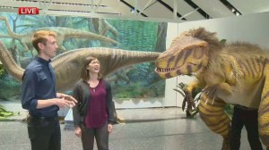Vicky the Velociraptor comes to Winnipeg