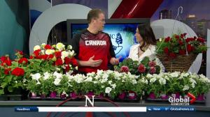 Classic Landscaping: Tips for making Canadian-themed hanging baskets