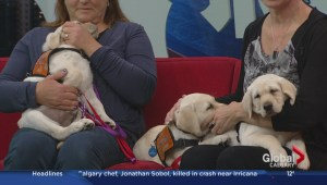 Pacific Assistance Dogs Society looking for puppy raisers