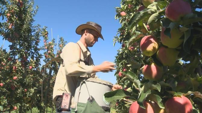 Okanagan Apple -Mela Okanagan in Acana lamb e okanagan apple in parafarmacia blue flax genova