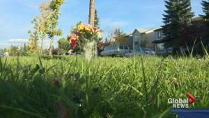Teen killed after being hit near a crosswalk.