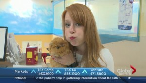 Adopt-A-Pet: Eva & Mary the guinea pigs