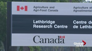 Scientist group denounces closure of Lethbridge Research Centre library