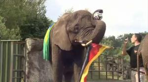 Elephant predicts Germany will defeat Brazil in World Cup semi finals