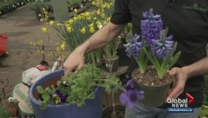 Gardening: First weekend of Spring