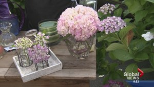 Gardening: Displaying Hydrangeas