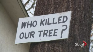 Tree poisoning in Saanich