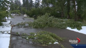 Cleanup crews out in full force after storm