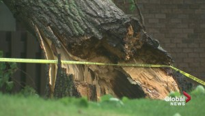 Storm downs trees and causes power outages