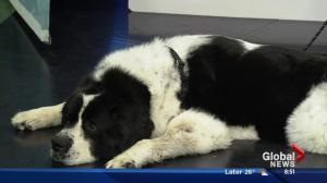 Edmonton Humane Society: Marley and Bianca