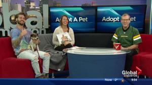 Adopt a Pet with SCARS: travbeachboy calendar & Nellie the Jack Russell Terrier